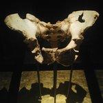 Posiblemente uno de los mejores museos de la Evolución Humana. Ademas de los restos fosiles de A