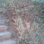 Plantas poco cuidadas, secas y casi muertas