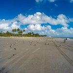 Photo de Crandon Park Beach