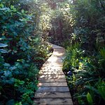 Path through the rainforest to the hot tub.