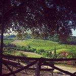 Agriturismo Villa Le Vigne Foto