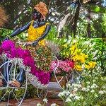 Orquídeas, Pájaros y Flores en el Jardín Botánico de Medellín