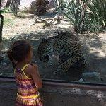 Foto di Living Desert Zoo & Gardens