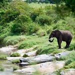 View of elephant in the river by our room
