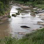View of hippo in the river by our room