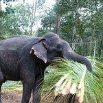 فيل اخر يعمل