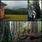 Foto de Tarkine Wilderness Lodge