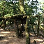 Kotohiki So照片