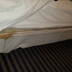 Microtel Inn & Suites by Wyndham Florence/Cincinnati Airport Foto