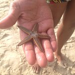 starfish, don't worry he got home safely, if you like snorkerling the reef is not far off the sh