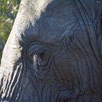 Eine unglaublich nahe Begegnung mit Elefanten - sehr beeindruckend und sehr sicher.