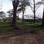 Photo of Lake Nakuru,Lake Elementaita,Lake Naivasha 1Day Tour - Tekko Tours & Travel