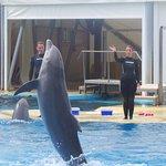 Dolphin show at aquopolis