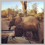 Wonderful stay at Kapama's Buffalo camp!! BIG thank you to everybody making our stay so memorabl