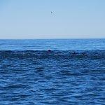 Foto de Dolphin Encounter