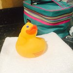 comfy spacious room after a day of wine tasting. Cute rubber duck in the bathroom. Nice shower w