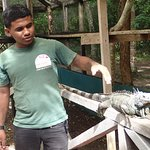 Foto de Green Iguana Conservation Project