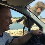 Foto de Safari Zoo de Mallorca