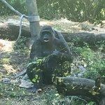 Woodland Park Zoo Foto
