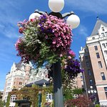 Hanging baskets of flowers on lamp posts in Empress grounds.
