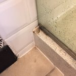 mold growing outside the shower door