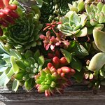 Succulents in a frame..