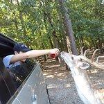 Foto de Harmony Park Safari