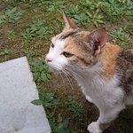 Hotel cat
