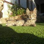 Photo of Tanit