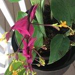 besondere Orchidee