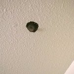 ceiling sprinkler