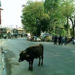 Foto di Sacred Valley Inn Pokhara