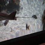 Rochen, Haie und weitere Großfische