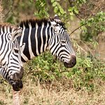 Foto de Full-Day Lake Manyara National Park Tour