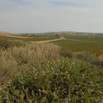 Foto di La Foresteria Planeta Estate
