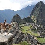 Machu Picchu con lama e Wayna Picchu... vista da lontano!!! Purtroppo