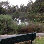 Glen Iris Park Wetlands