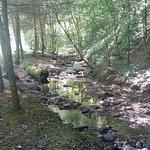 Kanawha State Forest Foto