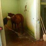 la douche du cheval ...