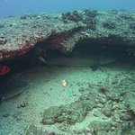 Fathom Five Divers Foto