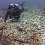 Checking out the scorpionfish