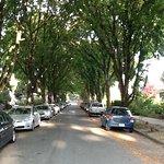Lovely tree lined street