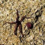 Star sea & sprotcket weel