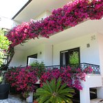 Our bougainvillea covered bedroom on the left.