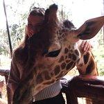 Photo of African Fund for Endangered Wildlife (Kenya) Ltd. - Giraffe Centre