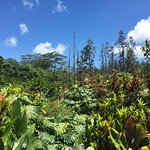 Photo de Lava Tree State Park