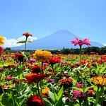 Yamanakako Hananomiyako Park Photo