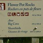 Fower Pot Rocks