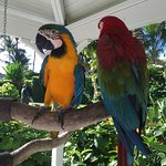 Beautiful Macaw Parrots adding to the tropical vibe