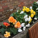 Views of begonias.